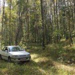 Как правильно ездить в лес за грибами. Основные правила для водителя